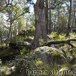 06 Viajefilos en Australia. Cathedral Rock NP 04