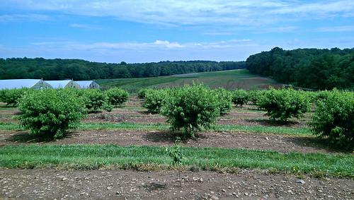 Alstede Farms -edit