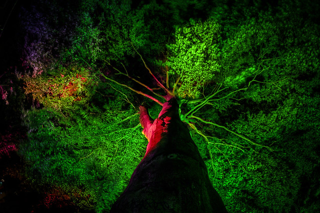 the colored tree 2