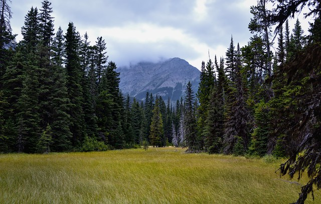 A Meadow with a Backdrop of Trees and Mountains