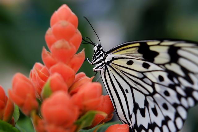 Papillons en Liberté 2014 - Photo 21