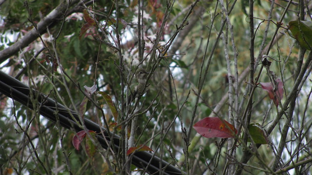 IMG_8545 hummingbird