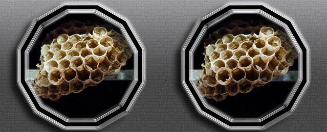 Old Paper Wasp Nest Macro Cross-eye 3D