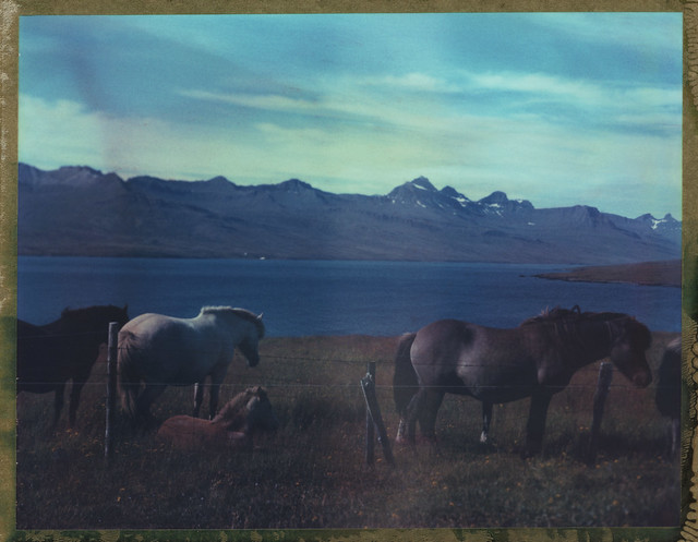 Horses In The East