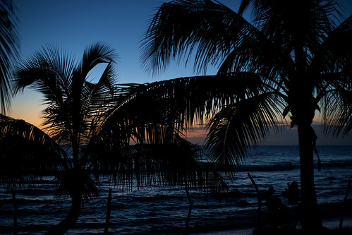 sunset jamaica coconuttree treasurebeach afnikkor50mmf14d