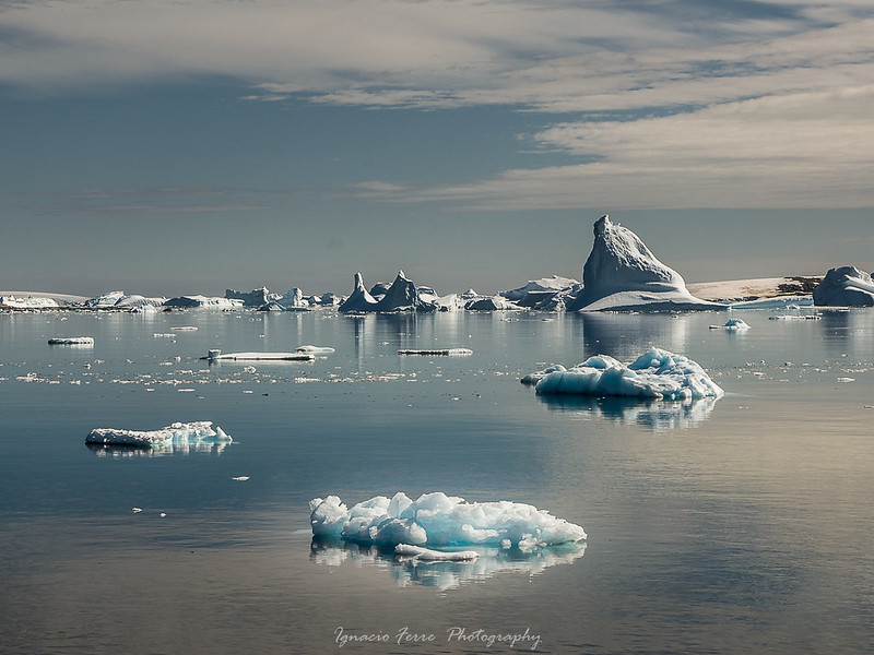 Frozen Landscape X