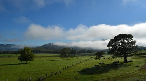 morning trees green fog fence countryside day shadows australia bluesky pasture nsw inversion northernrivers liftingfog richmondvalley morninglandscape therisk