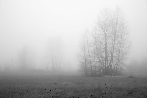 trees blackandwhite bw tree field fog washington foggy wa fallow ridgefield canoneos5dmarkii canon5dmarkii canonef2470mmf28liiusm