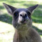01 Viajefilos en Australia. Morriset 15
