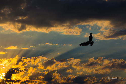 cloudsstormssunsetssunrises tamron washington sunset northwest streaks sound clouds sun blue heavensgate silhouette tacoma brownspoint portoftacoma bird day sky rat seagull puget pacific canont51 unitedstates us