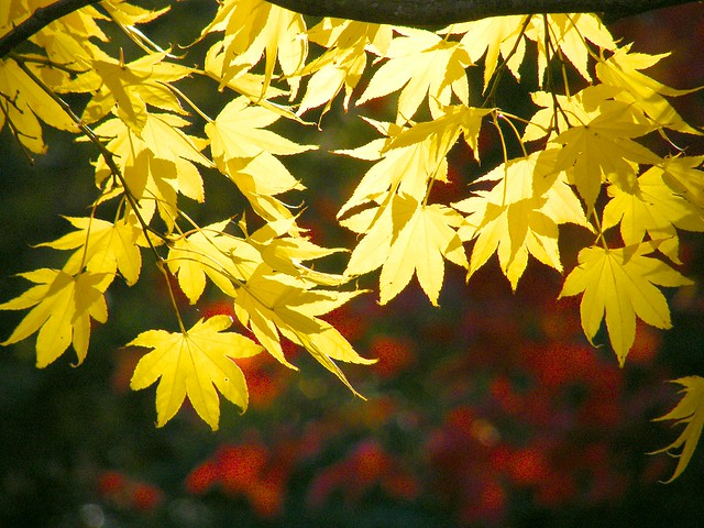 Leaves in Gold