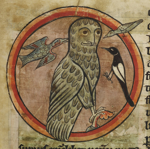 Bestiary - caption: 'Owl mobbed by smaller birds' | by The British Library