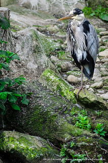 Blijdorp ZOO, Rotterdam | by Thoran Pictures, Thx for more then 5 million views