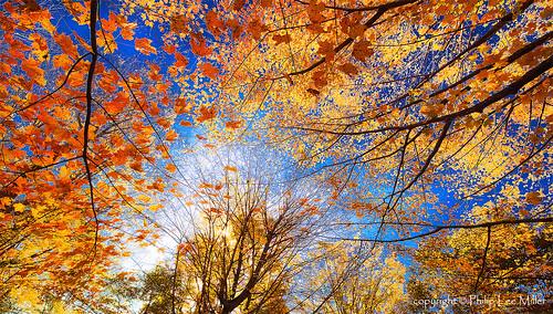 autumn nature landscape vermont fallfoliage mapletrees brilliantcolor dd800