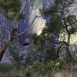 04 Viajefilos en Australia. Wollomombi 04