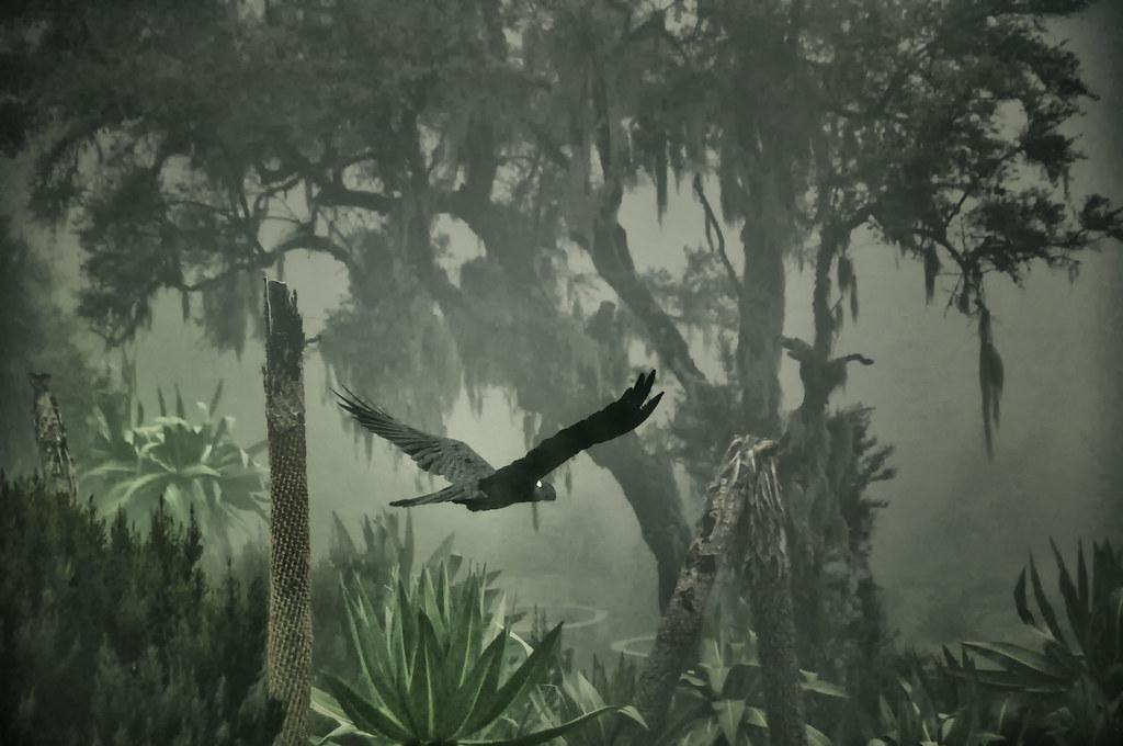 The Black Raven, Ethiopia