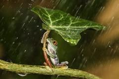 Oh Nooo..:( Raining