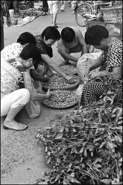 Zhejiang Cicheng Lubu 浙江慈城 陆埠2005 -69