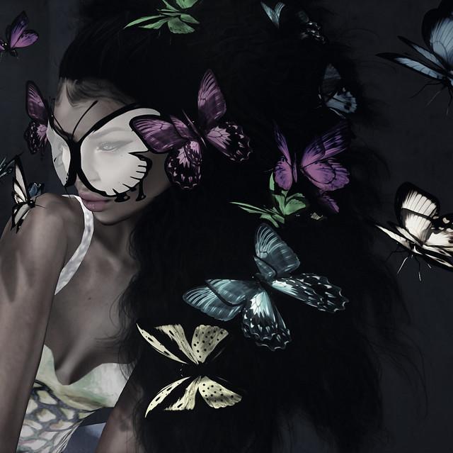 butterflies ~b/w