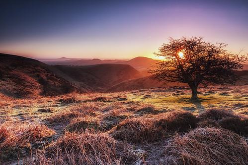 tree sunrise canon long shropshire sigma hills 1750 28 mynd 40d