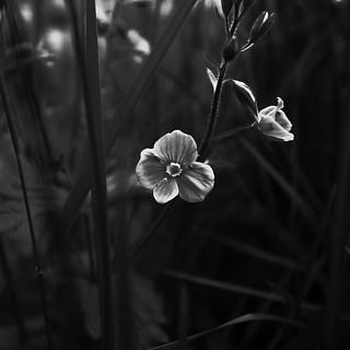 A small flower | by Jonne Naarala