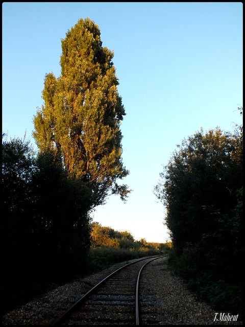 Railway - Chemin de Fer, Lillebonne ( Les Herbages ).