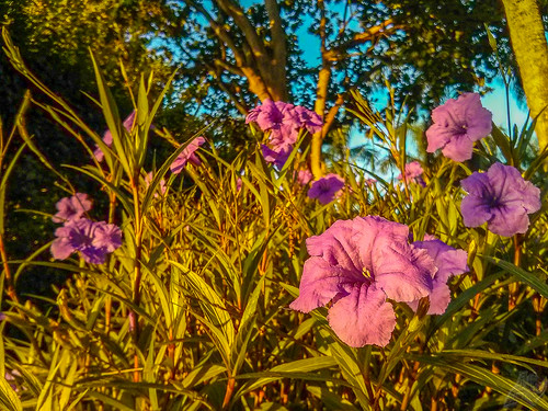 morning flowers autumn trees usa plant flower sunrise google florida doral lightroom mako lgelectronics nexus4 flickrandroidapp:filter=none