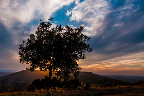 sunset mountain tree silhouette clouds glow lonelytree sunsetpoint arkansasbeauty mountnebostatepark