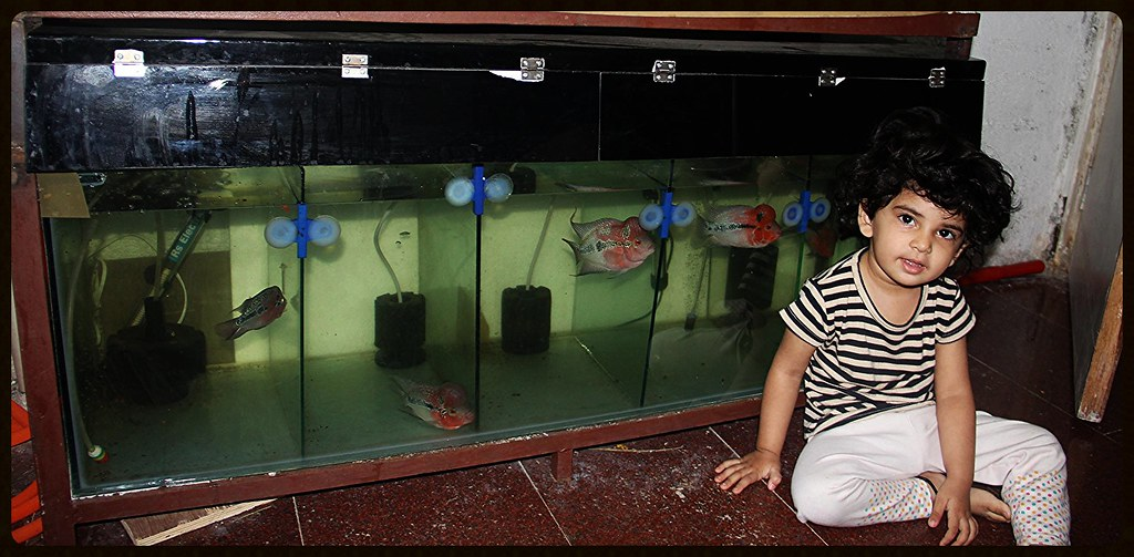 Nerjis Asif Shakirs Unique Rare Flowerhorn Collection | Flickr
