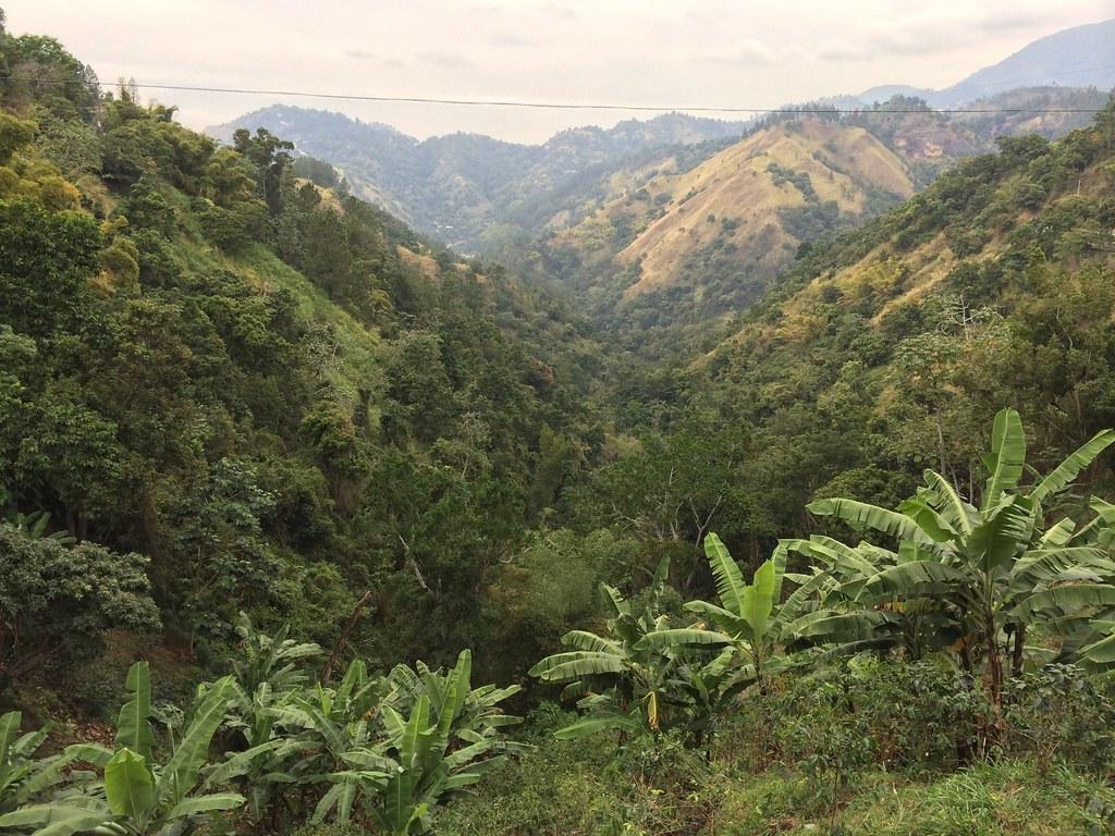 """Résultat de recherche d'images pour """"Blue Mountains jamaica"""""""