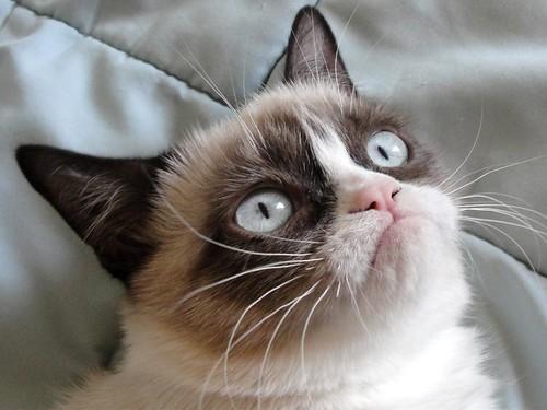 Grumpy-Cat   by wackyvorlon