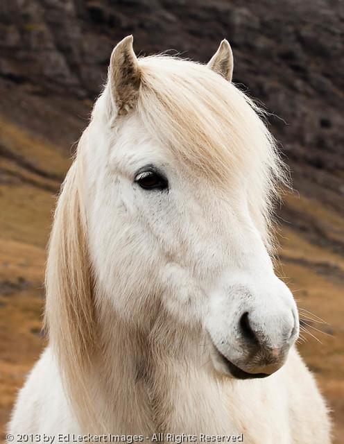 Do You Think I'm Pretty?, West Iceland