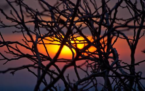 sunset branches mukacheve