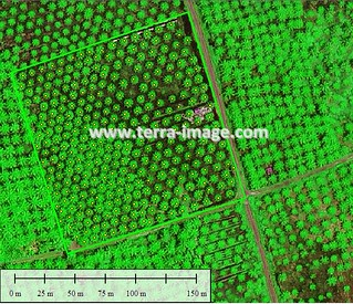 Green | by Satellite Imagery and Mapping