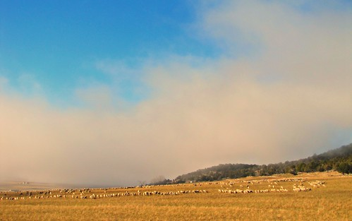 fog rural colorado sheep flock livestock transhumance temperatureinversion montrosecolorado bostwickpark