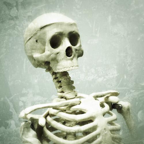 bones | by woodleywonderworks