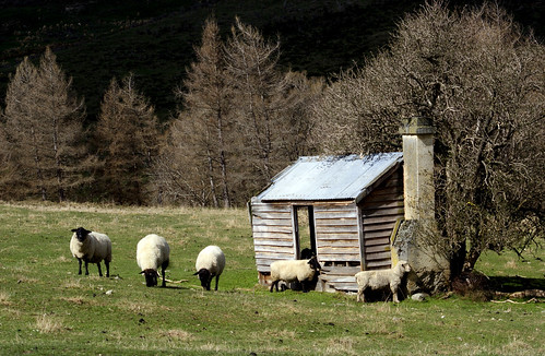 Shepherd's shelter. | by Bernard Spragg