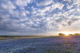 Bluebonnet Sunrise - Ennis, Texas | by Kelly DeLay