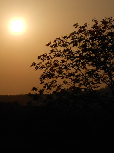 summer sun tree black hot sunset sky serbia sundown srbija serbien nikon s2600