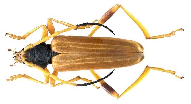Schmidtiana spec 2