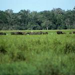 1983-7-28 srilanka