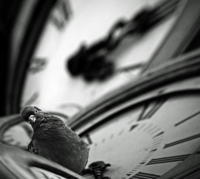 Le temps s'en va | 逝者如斯夫
