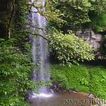 07 Viajefilos en Australia. Dorrigo Rainforest NP 40