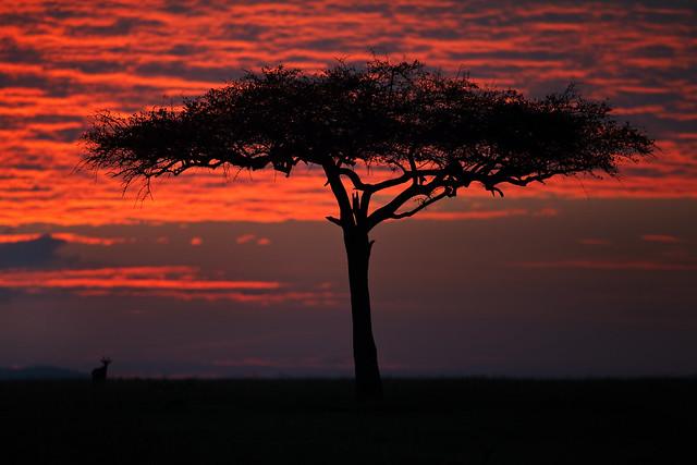 Crimson Mara