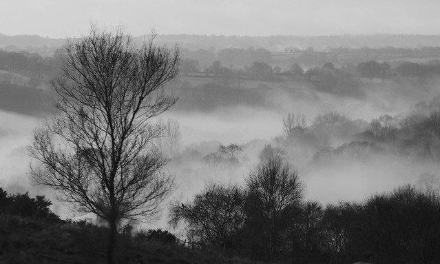 Winter valley mist