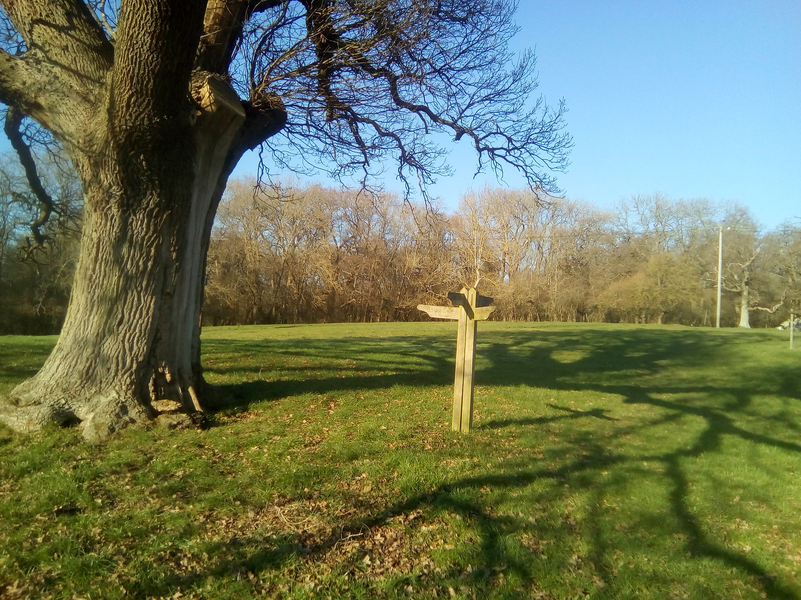 Finger post Field, field, field and oak tree