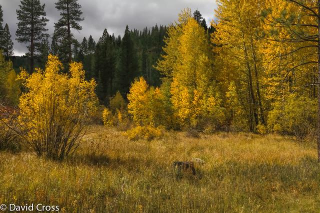 Autumn Color Near Cold Creek