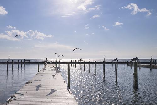 ocean new york sun seagulls cold wet water weather birds clouds island bay dock long sailing pants gulls clear sayville association