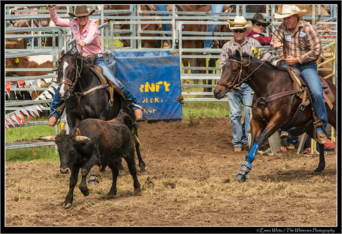 2014_Rodeo_20140412_Dungog_7349   by Seeking Nature   Aus