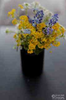 Wild Field Flowers (0013) | by Meeta Wolff @ What's For Lunch, Honey?